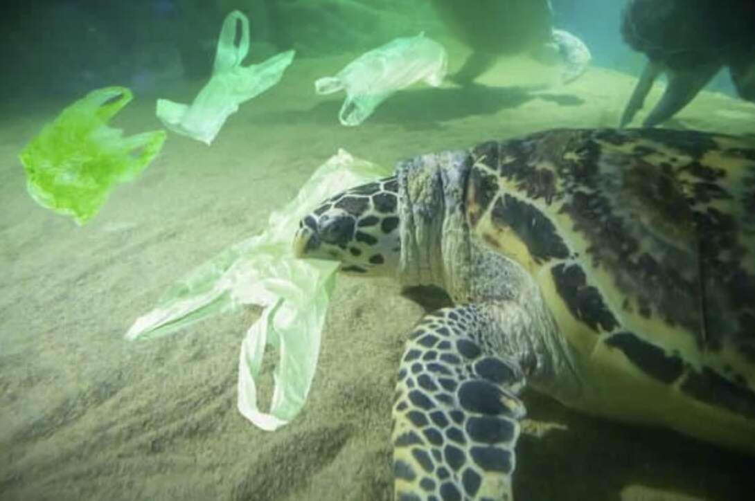 Dia Internacional Sem Sacos de Plástico
