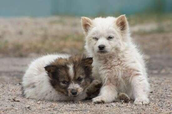 O Dia Internacional do Animal Abandonado