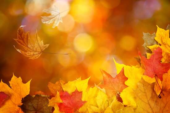 O outono inicia-se