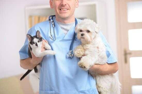 Dia do Animal e do  Médico Veterinário